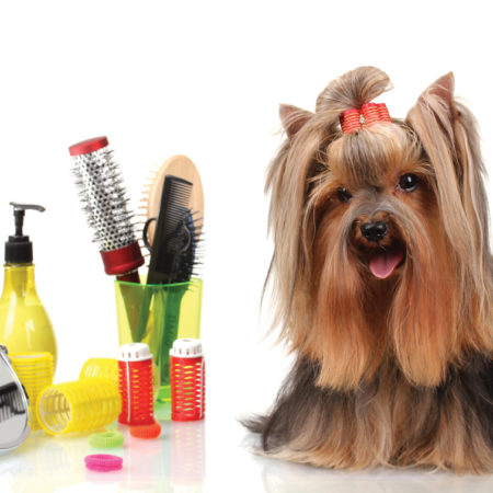Dog Grooming - Advanced Course