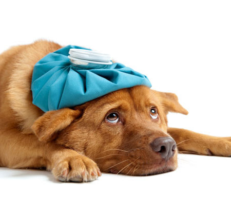 First Aid for Puppies and Dogs Course