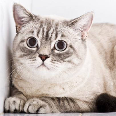 Cat Anxiety and Stress Course