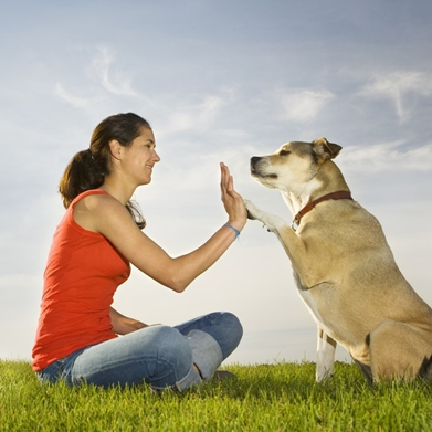 Canine Wellbeing Course
